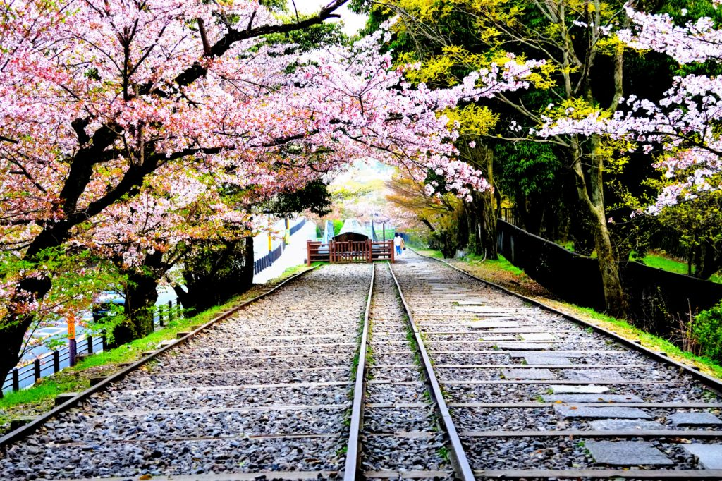 Railway and cherry trees