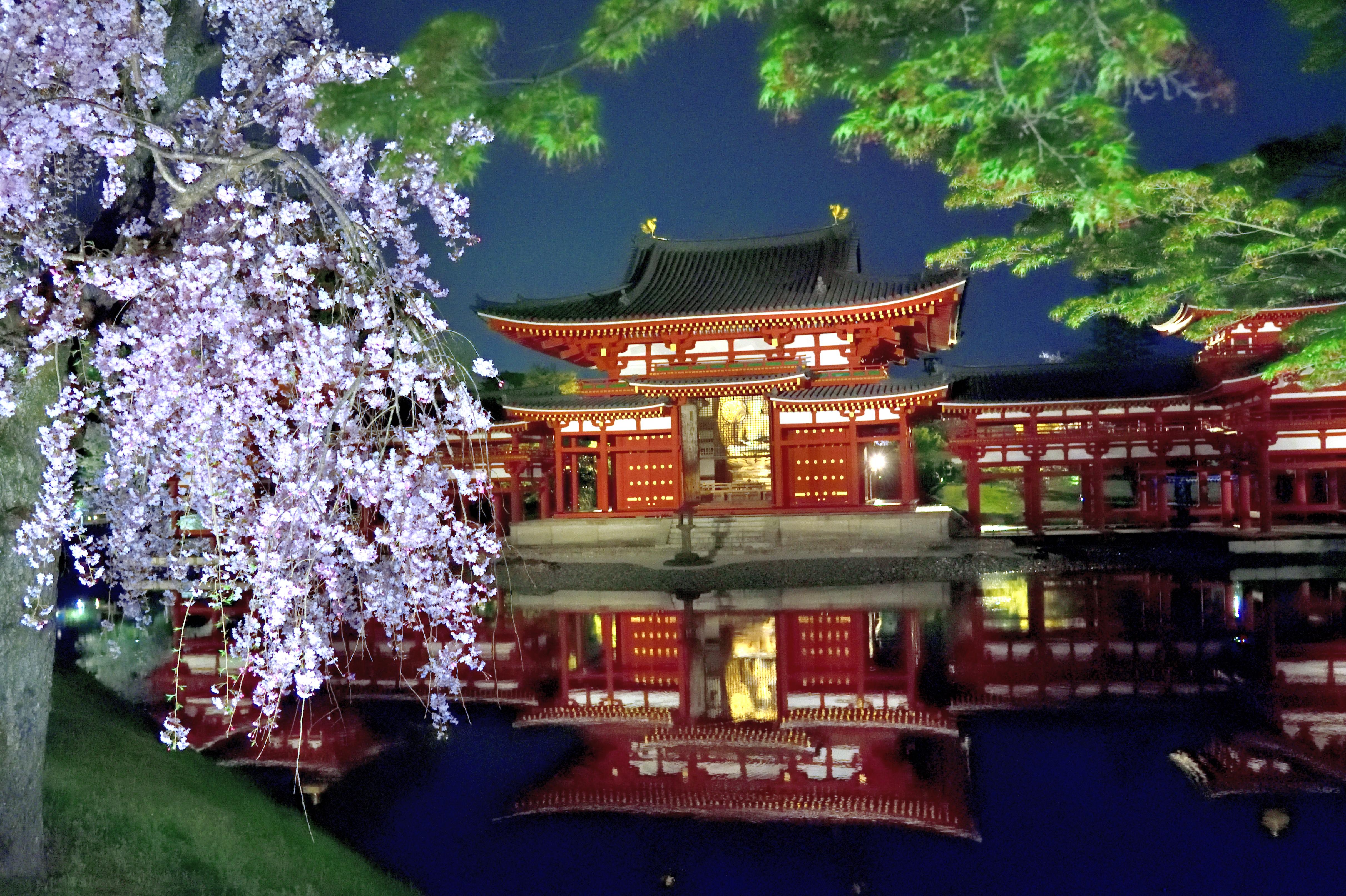 Cherry blossom and phenix hall