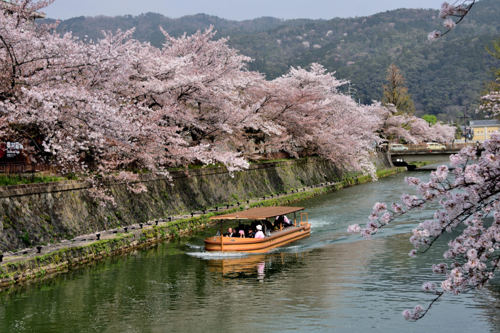 Boat and Cherry blossom
