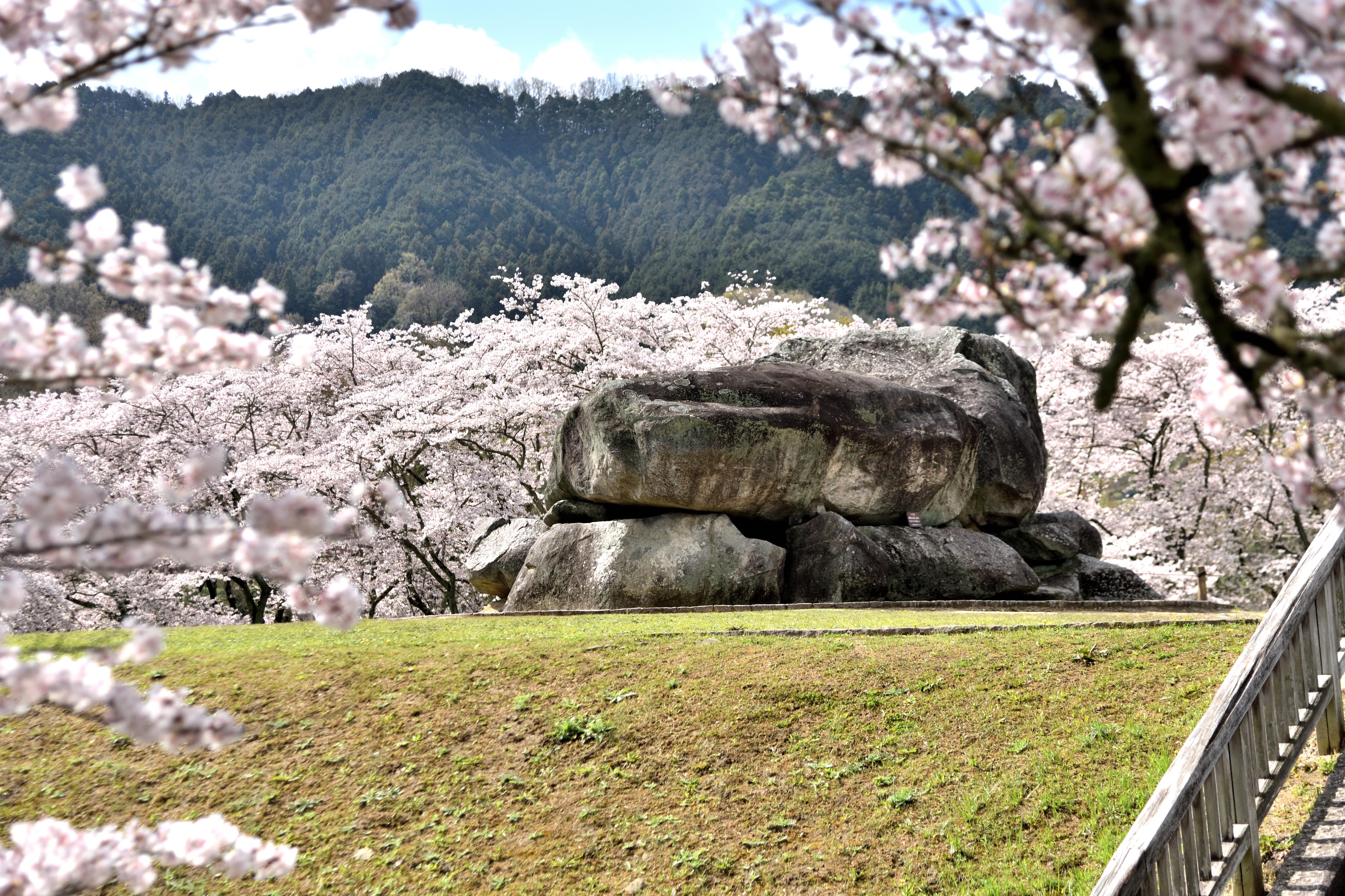 Ishibutai ancient tomb surround by cherry trees