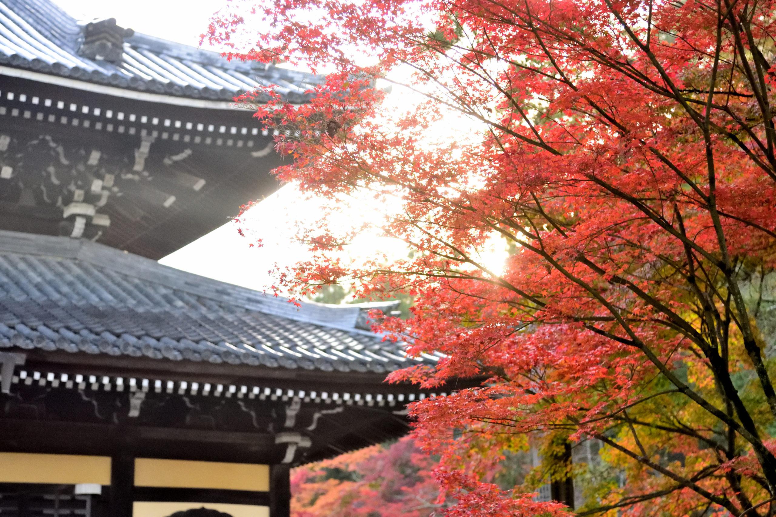 Nanzenji and autumn leaves